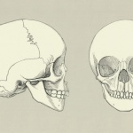 Skull of a Four Year Old