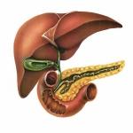 Liver, Gall bladder, Pancreas