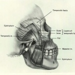 Fascia and Muscle Layers